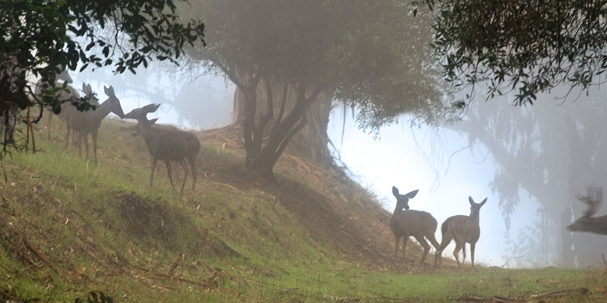 Deer Grazing in the Foggy Forest