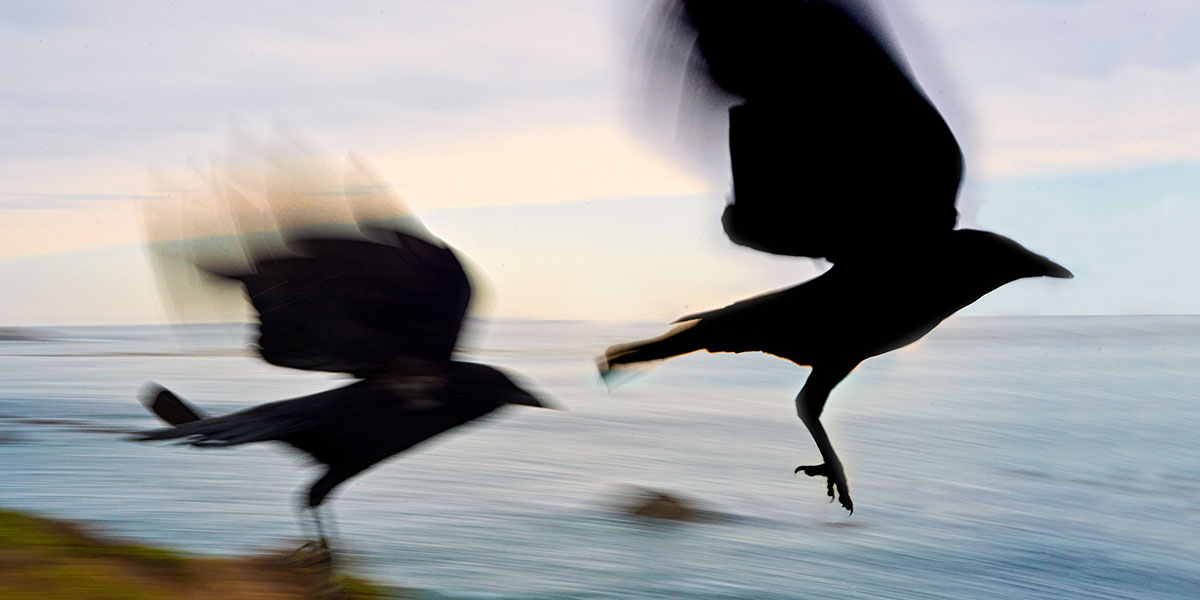 Pair of Seagulls Flying over Beach