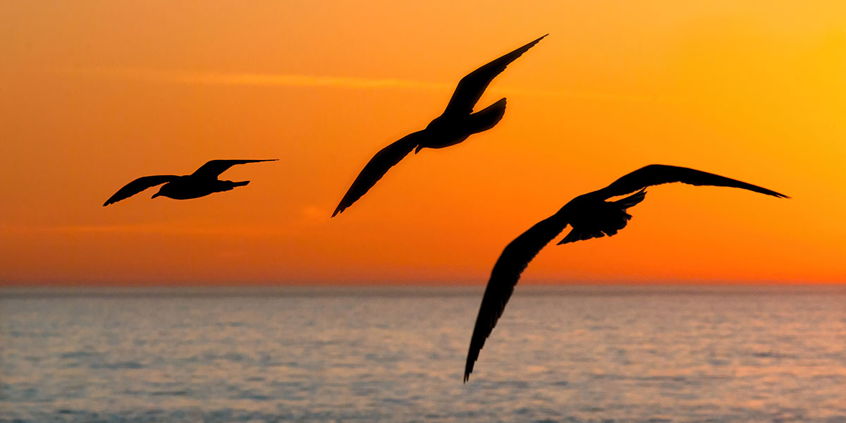 Seagulls Winging over the Ocean at Sunset