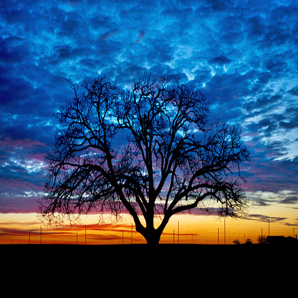 Solitary Tree Against Striking Sunset Sky